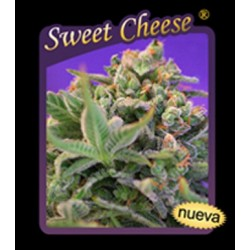 Sweet Cheese (10uni)
