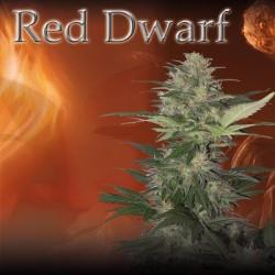 Red Dwarf (5uni)