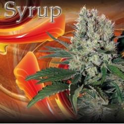 Syrup Auto (5uni)
