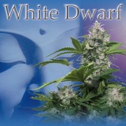 White Dwarf (5uni)
