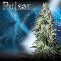Pulsar (5uni)