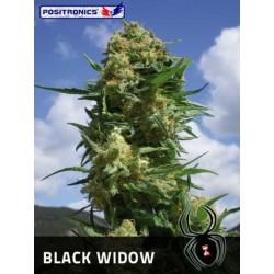 Black Widow (10uni)