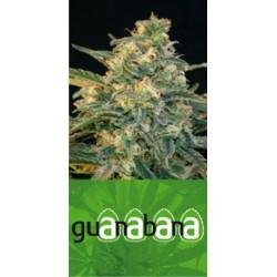Guanabana (3uni)