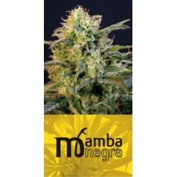 Mamba Negra (3uni)