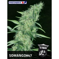 Somango 47 (10uni)
