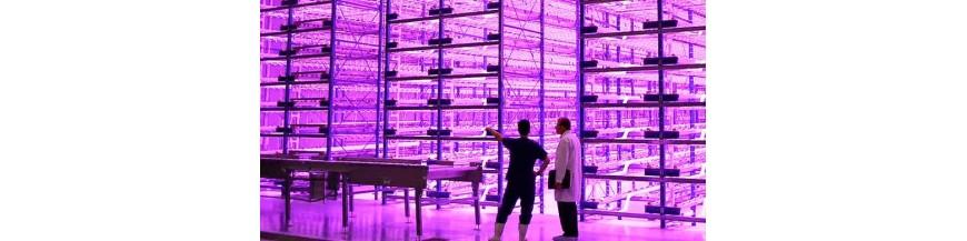 Kits de cultivo LED